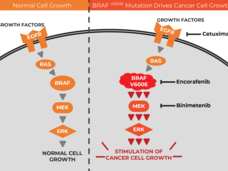 A diagram showing how three drugs target parts of the MAPK signaling pathway in cancer cells with BRAF mutations.