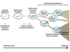 An illustrated timeline showing the emergence and accumulation of genomic mutations in tissue over time.