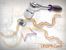 How CRISPR Is Changing Cancer Research and Treatment